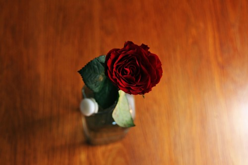 Roses for a day of love. Who doesnt love roses.